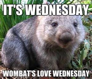WombatWednesday2